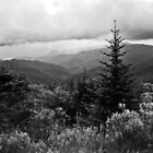 View from Mt. Mitchell by Bill Wetmore