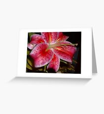 Single Star Gazer Greeting Card