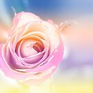 Pastel Rose by lensbaby