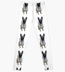 Belgian Malinois,puppy love Leggings