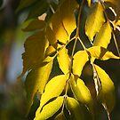 Seasons Change by Erial