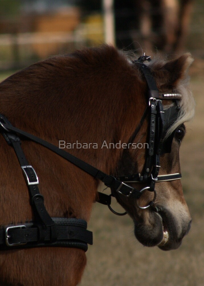 Harness Headstudy 1 by Barbara Anderson
