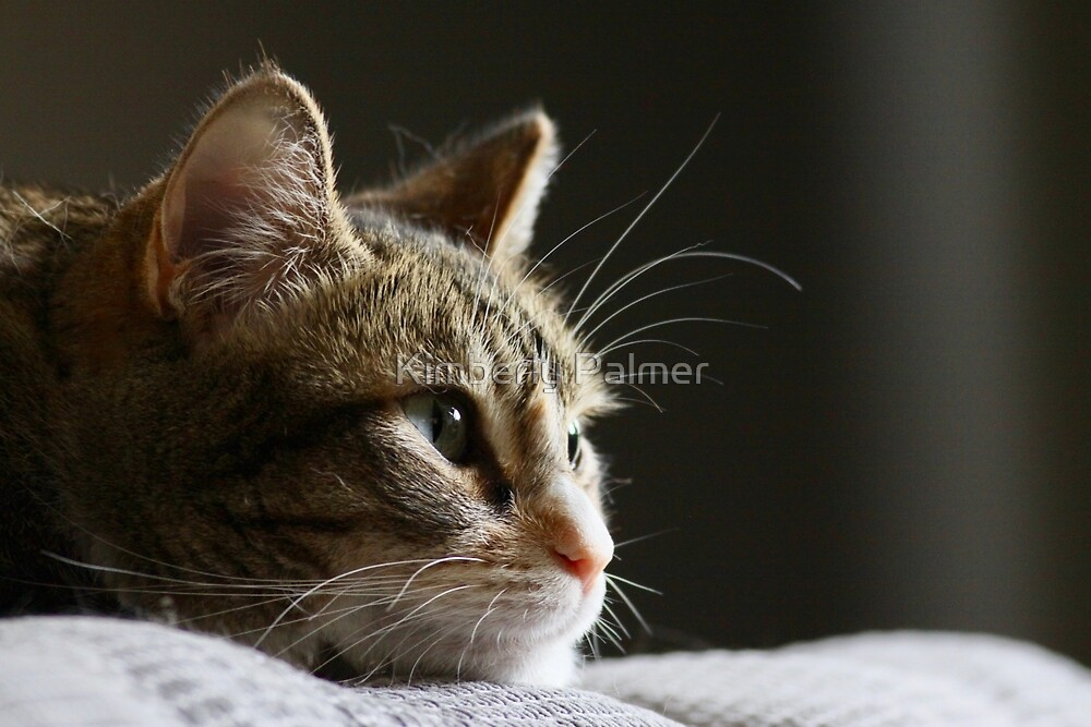 Kitty by Kimberly Palmer