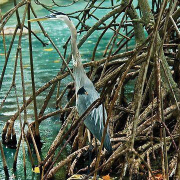 Blue Heron by bettycruz