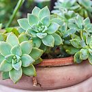 Green cactus  by Southern  Departure