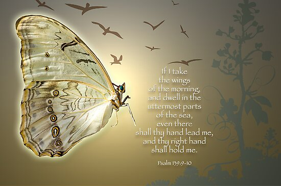 Wings of the Morning by Bonnie T.  Barry