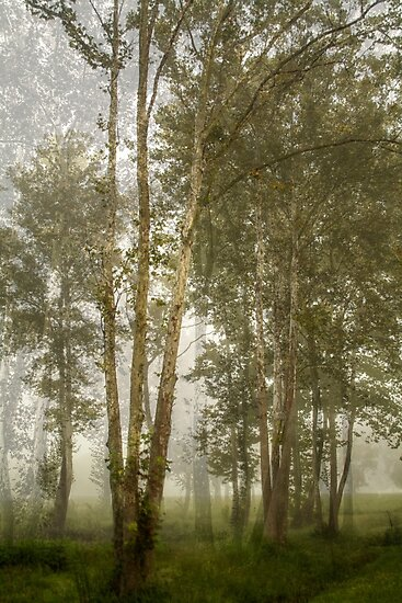 Forest Ethereal  by Susan Nixon