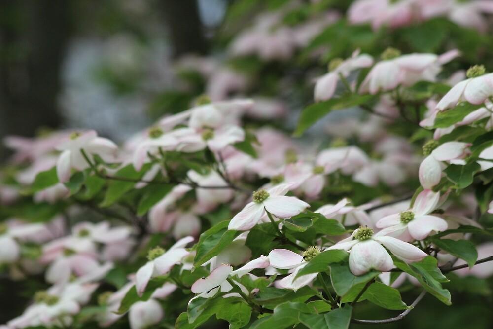 Soft Pink Petals by Grace Jane