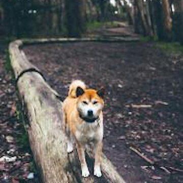 Dog by DvorakDesign
