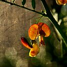 Encroaching Beauty by Jonicool