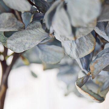 Leaf by DvorakDesign