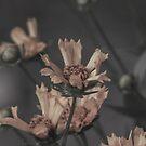 Backyard Flowers After the Rain by Pandamatastic