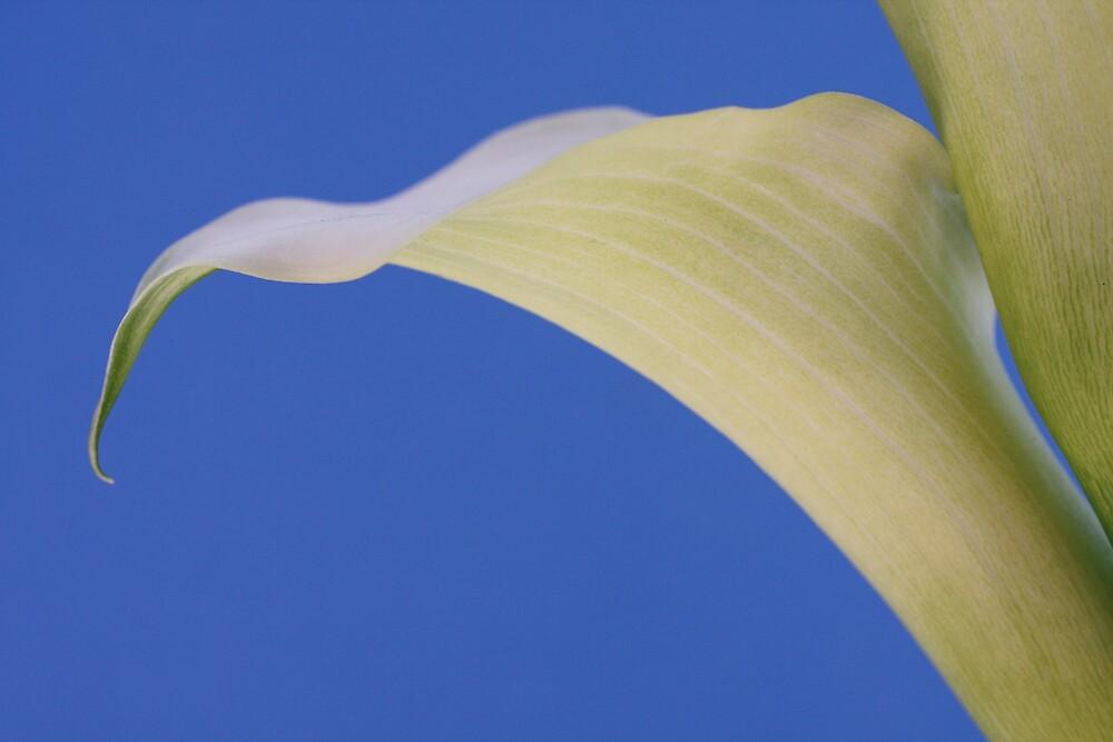 Lilies in blue by Jeff  Wilson