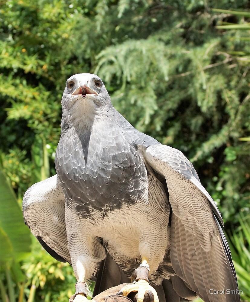 A bird of prey by cs-cookie