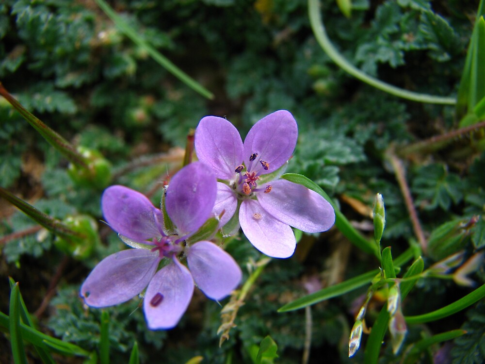 FLOWER by suzyjbrook