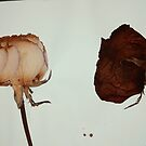 Pressed Flowers 1 by Alissa Velasco