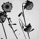 Pressed Flowers 3 by Alissa Velasco