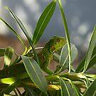 Baby Iguana by dcdigital