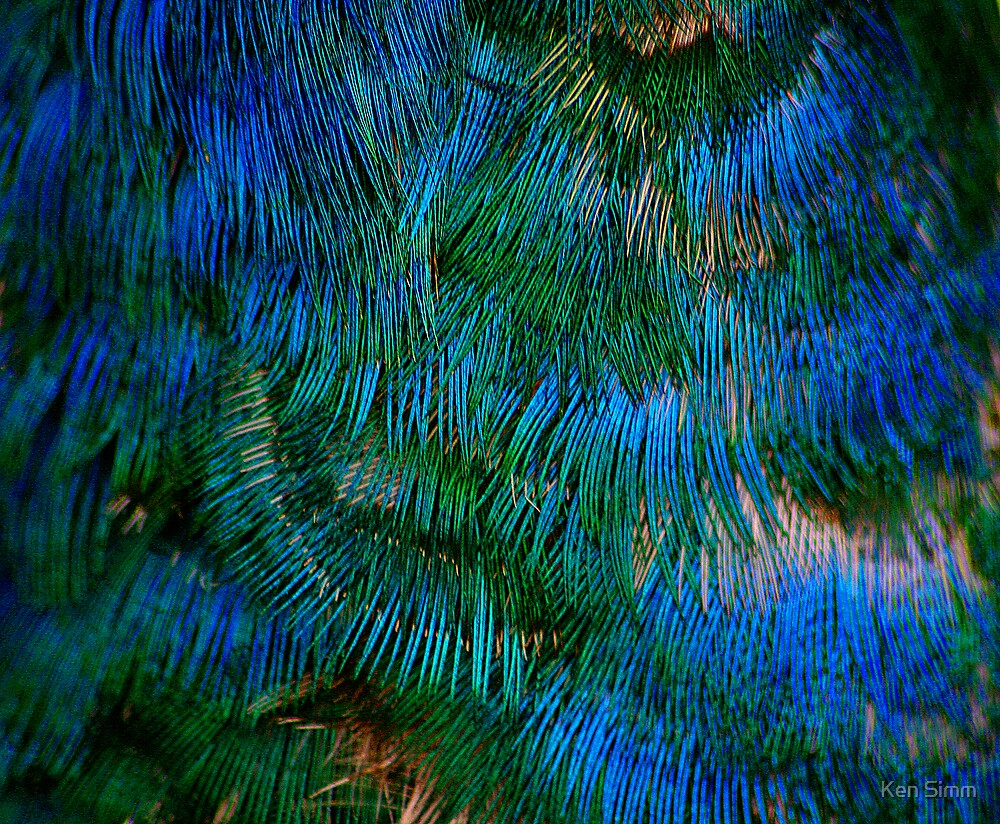 Peacock Feathers by Kenart