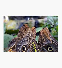 Many colorful wings of butterflies Photographic Print