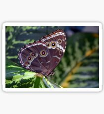 Beautiful colorful butterfly on green leaves Sticker