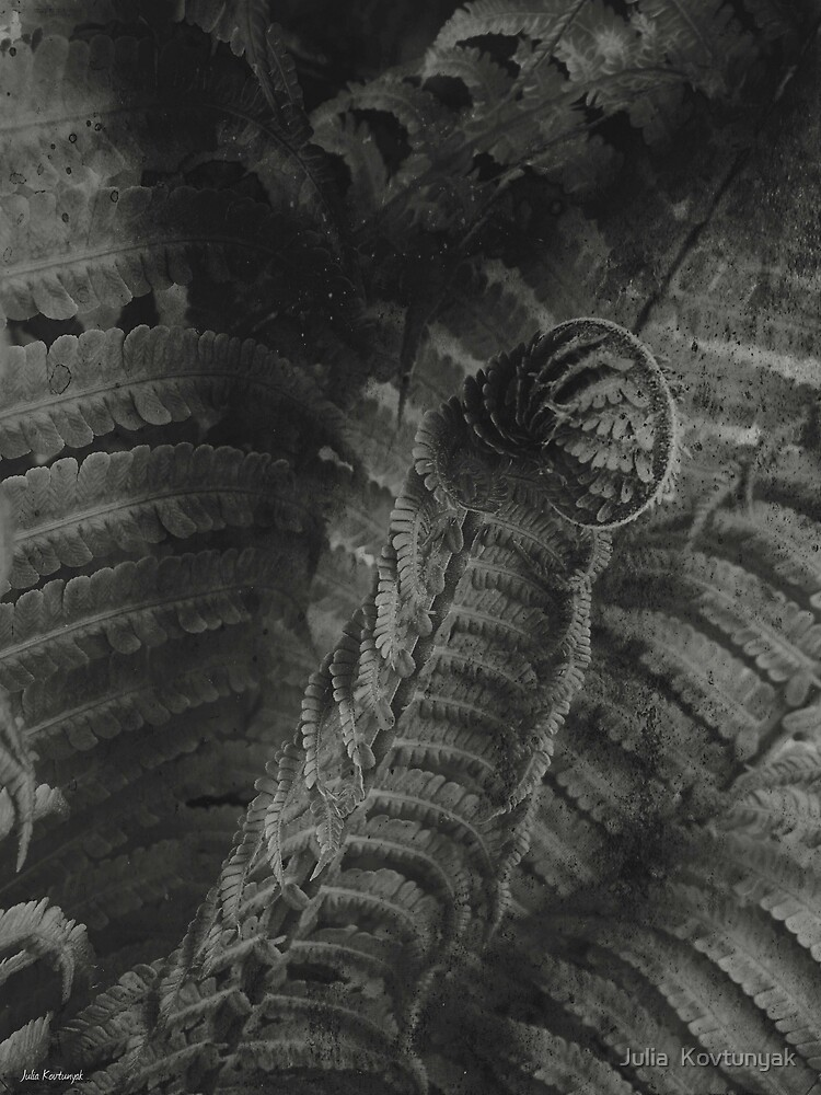 bnw fern by Julia  Kovtunyak
