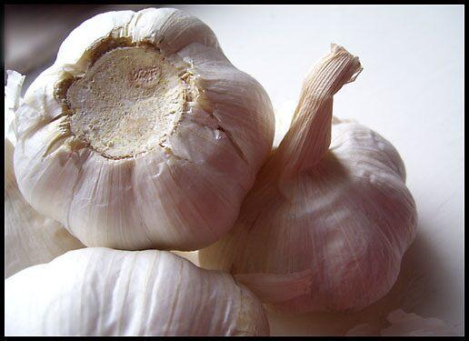 Garlic Still by PinkFairyWings