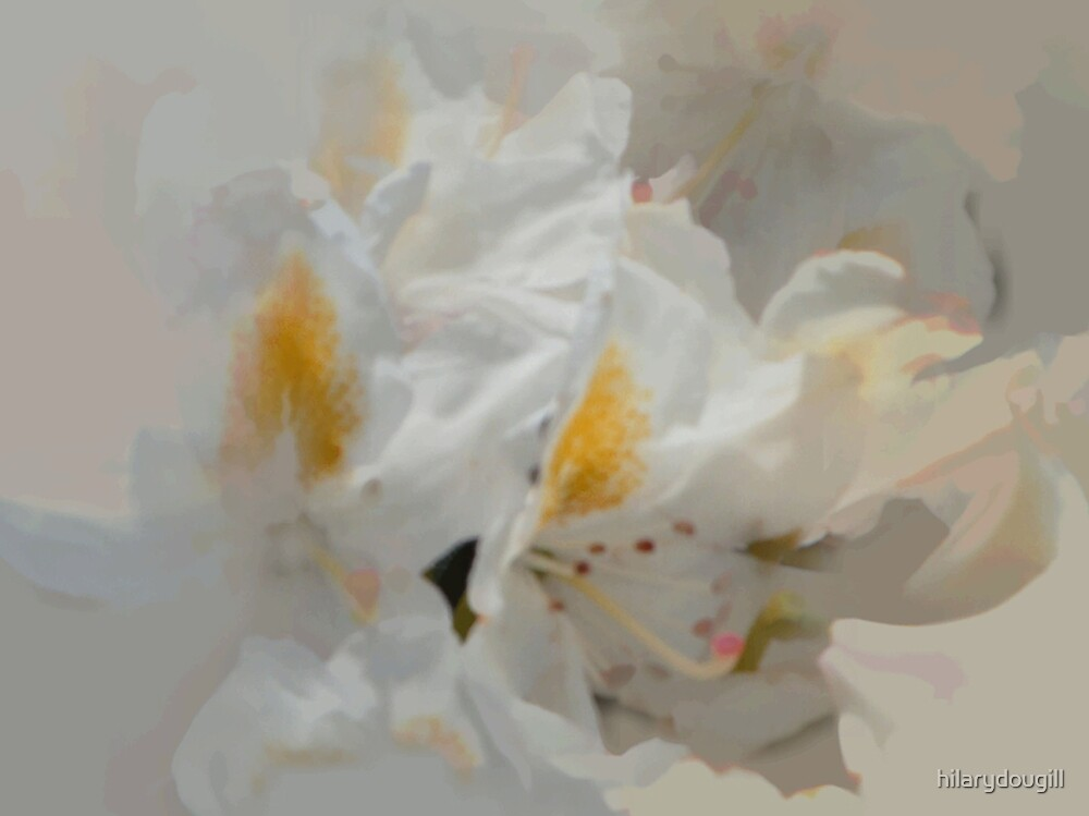 abstract of white rhodie by hilarydougill