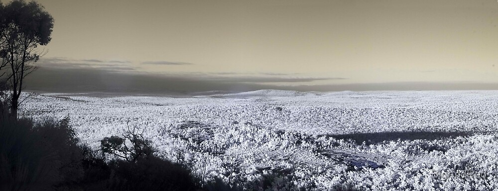 infrared pan from top of Mt Dale by BigAndRed