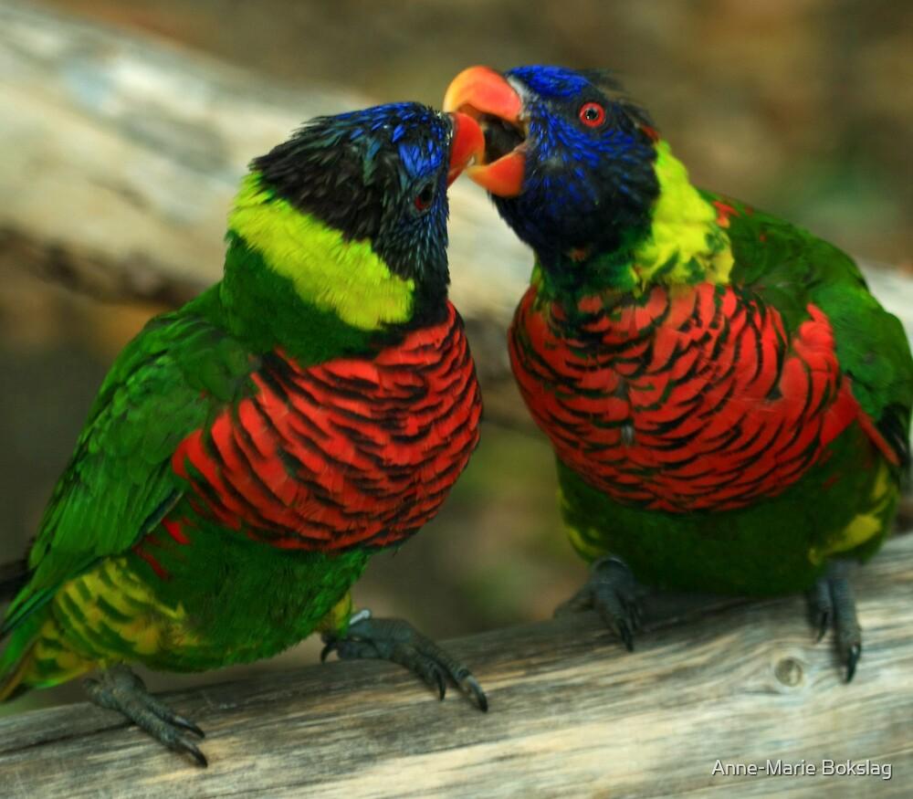 Love Birds by Anne-Marie Bokslag