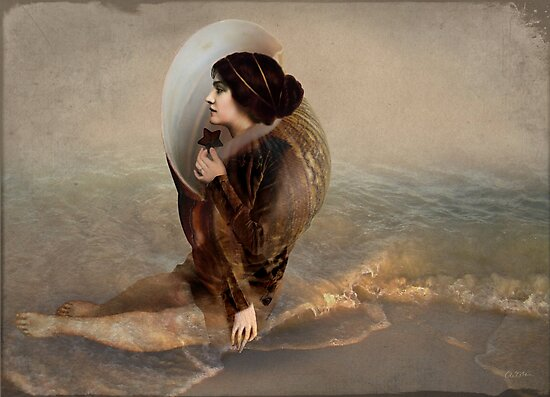 The collector by Catrin Welz-Stein