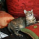 This cushion is mine ! by JudyBJ
