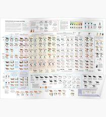 Póster Colores y patrones de Cat House