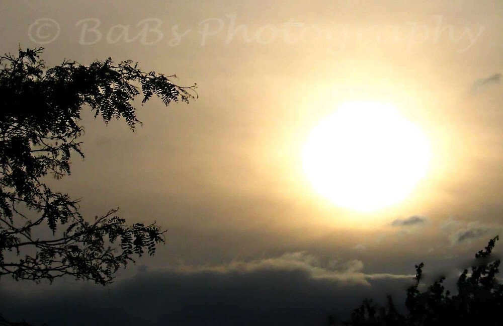 evening sun by bethanne4180