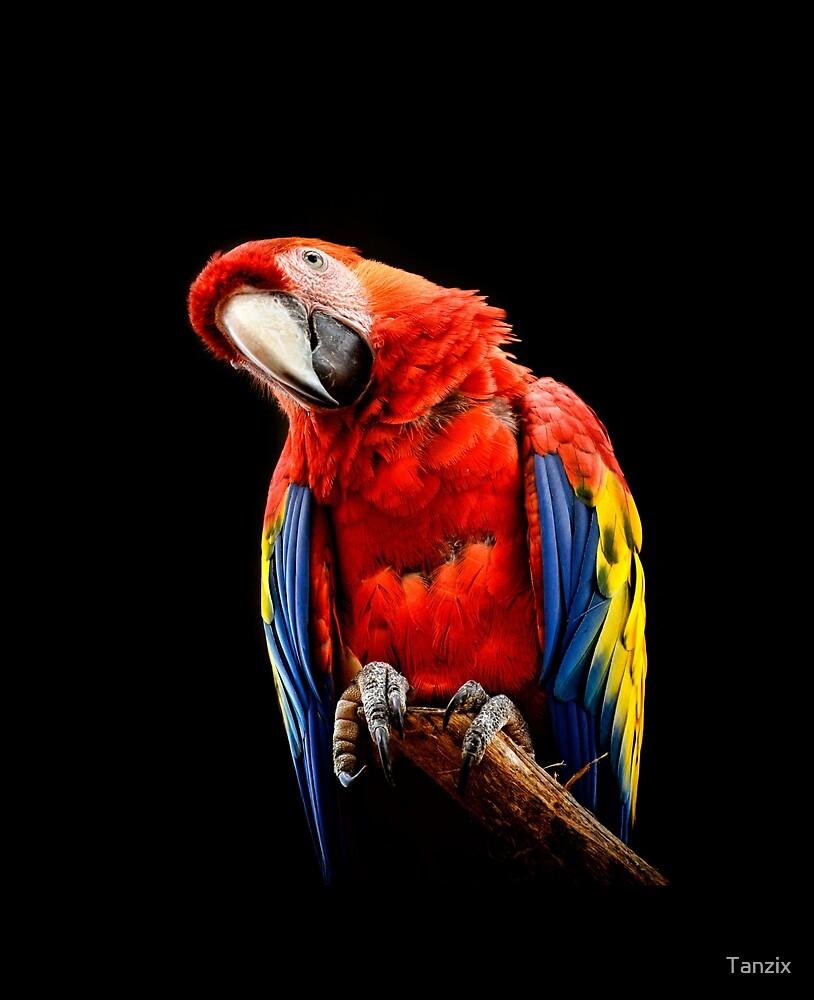Scarlet Macaw by Tanzix