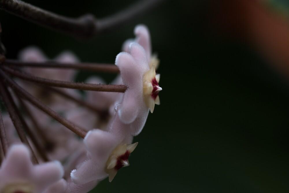 Flower 9 by Ulfhedinn