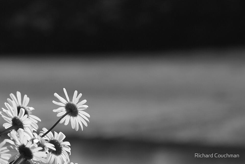 """ Along Daisy Creek "" by Richard Couchman"