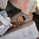 Old Bricks by Rebekah  McLeod