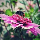 Busy, Busy Bee by Karen Stahlros