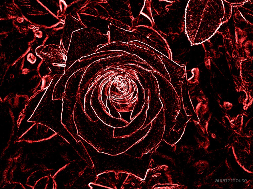Neon Red Rose by awaterhouse