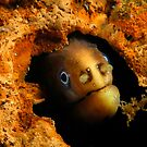 Moody Moray by MattTworkowski