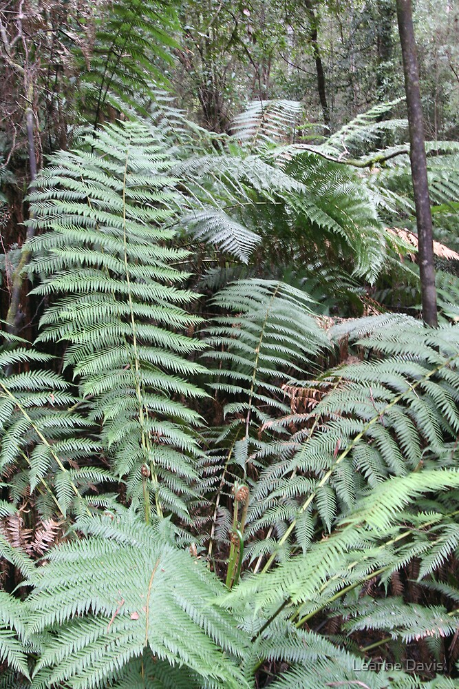 Ferns in the forest by Leanne Davis
