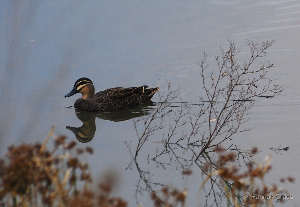 Duck in the Lake by Hannah Grace