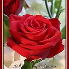 Whispers of Passion and Love Red Rose Greeting Card by taiche