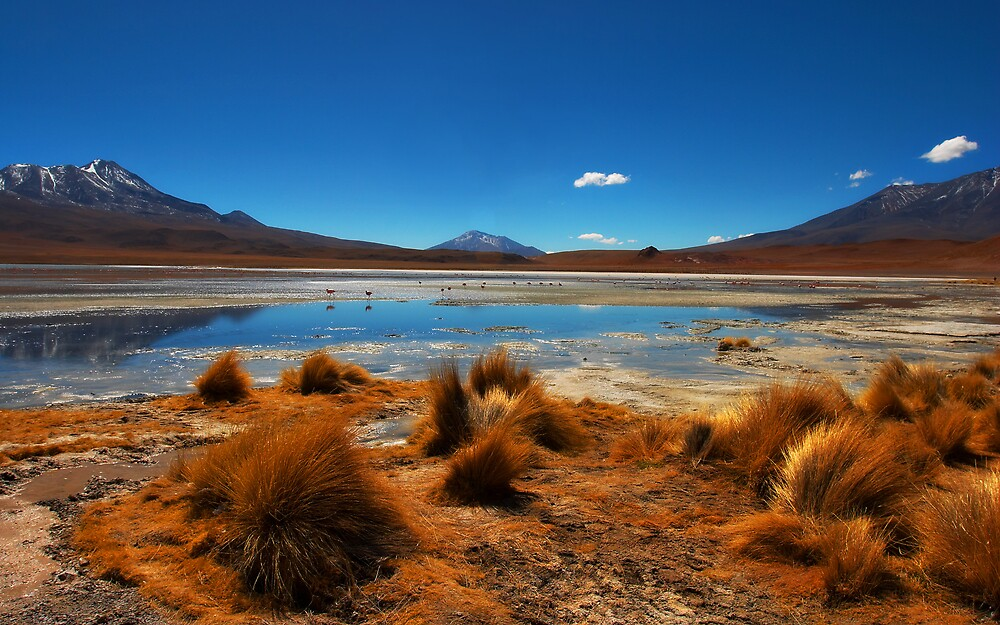 The Altiplano by Steve Axford