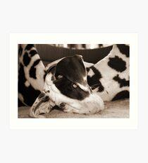 Great Dane Puppy Doopey Art Print