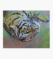 Tiger Play Photographic Print