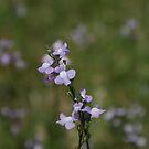 IN A FIELD OF FLOWERS by Dana Yoachum