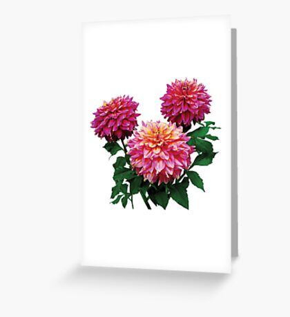 Pink Dahlias Kidds Climax Greeting Card