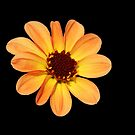 Yellow and Orange Dahlia by Mike HobsoN